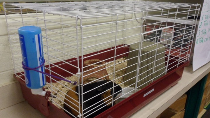 Pet in cage in child care